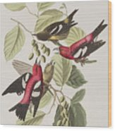White-winged Crossbill Wood Print