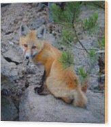Wild Fox Near Den In Wilderness Animals Wood Print