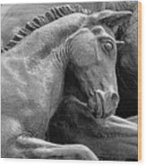 Wild Mustang Statue I V Wood Print