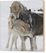 Wolf Pack Wood Print