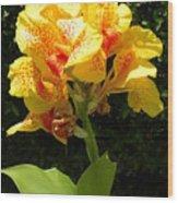 Yellow Canna Lily Wood Print