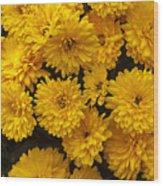 Yellow Chrysanthemums Wood Print