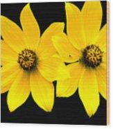 2 Yellow Daisies Wood Print
