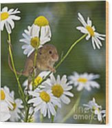 Young Eurasian Harvest Mouse Wood Print