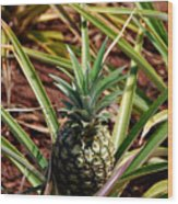 Young Pineapple Wood Print