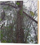 Australia - Molecules Of Water On A Web Wood Print
