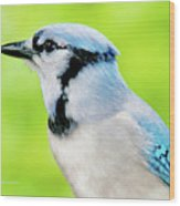 Blue Jay, Animal Portrait Wood Print