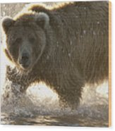 Grizzly Bear Ursus Arctos Horribilis Wood Print