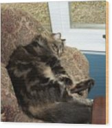 Maine Coon Cat Wood Print