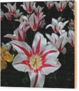 Tulips Wood Print