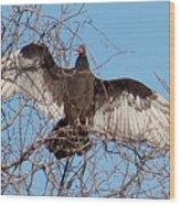 2000-buzzardjan2011 Wood Print