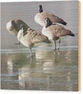2004-geese On Ice Wood Print