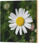 2008 Daisy Wood Print