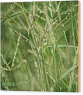 2008 Grasshopper In Green 'can You See Me...' Wood Print