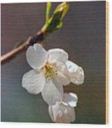 2008 Springtime  6365  Wood Print
