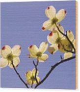 2009 Springtime  6399  Wood Print