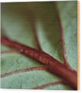 2010 Hydrangea Leaf Close Up 1 Wood Print