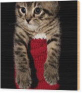 2010 Stocking Cat 2 Wood Print