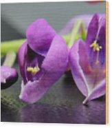 2010 Wisteria Blossom Up Close 1 Wood Print