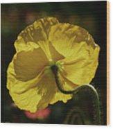 2011, Yellow Poppy Wood Print