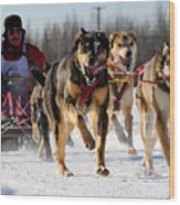 2011 Limited North American Sled Dog Race Wood Print