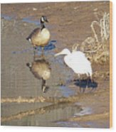 2012-white Crane And Canadian Goose Wood Print