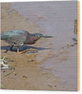 2013-baby Green Heron Wood Print