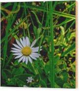 2015 08 23 01 A Flower 1106 Wood Print