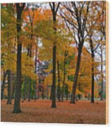 2015 Fall Colors - Washington Crossing State Park-1 Wood Print
