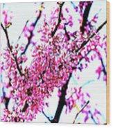 2016-03-18 Redbud Tree In Bloom Wood Print