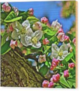 2016 Early May King Arthur Crabapple Wood Print