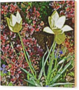 2016 Early May Side Garden Delight Wood Print
