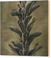 2016 Horicon Marsh - Seed Pods Unfurled Wood Print