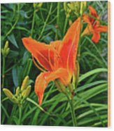 2016 July Garden Daylily Summer Afternoon Wood Print