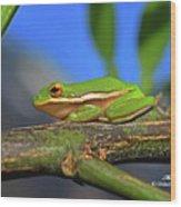 2017 11 04 Frog I Wood Print