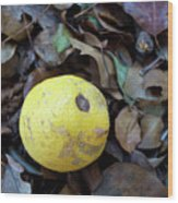 2017 Limone Wood Print