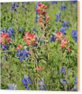 201703300-068 Indian Paintbrush Blossom 2x3 Wood Print
