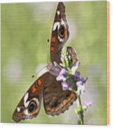 2065 - Butterfly Wood Print