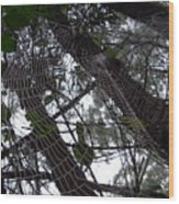 Australia - Spider Web High In The Tree Wood Print
