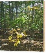 Autumn In Ma Wood Print