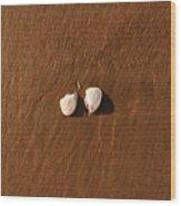 Beach Shell Wood Print