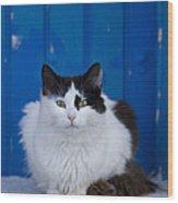 Cat On A Greek Island Wood Print
