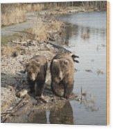 Grizzly Bear Ursus Arctos Horribilis Wood Print
