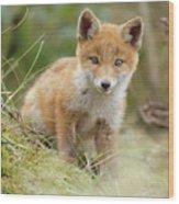 Red Fox Cub Wood Print