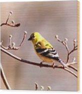 2164 - Goldfinch Wood Print