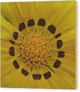 Australia - Yellow Daisy Flower Wood Print