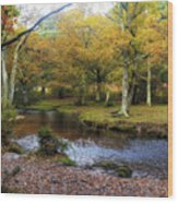 New Forest - England Wood Print