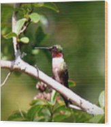 2274 - Hummingbird Wood Print