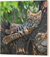 In A Lurch - Bobcat 8 Wood Print