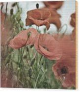 Poppy Meadow Wood Print